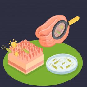 микробиота по осипову